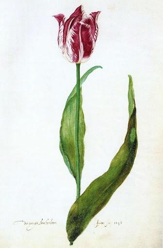 u0026 39 de vroege brabantsson u0026 39  from the judith leyster tulip book