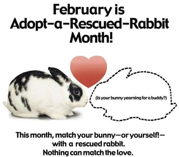 February is adopt a rescue rabbit month!