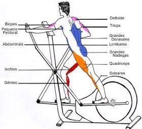 O  elíptico , ou transport , como algumas pessoas  conhecem, foi criado para pessoas que não querem se submeter a exercícios de  alto...