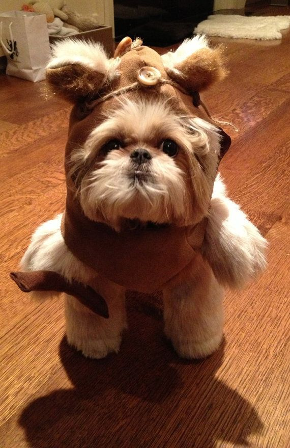 I have always wanted an Ewok!  This might be the only dog I would ever let in my home.