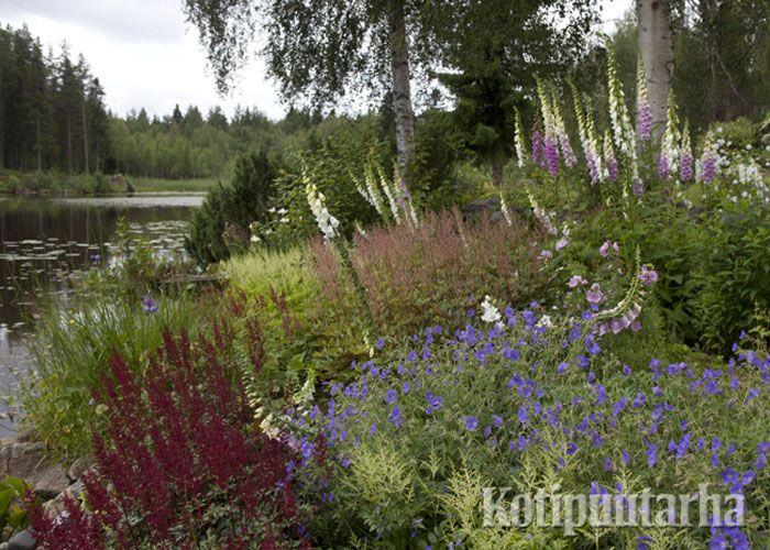 Tämä erikoinen puutarha on rakennettu veden rajaan asti. Nämä perennat viihtyvät aivan veden äärellä. www.kotipuutarha.fi