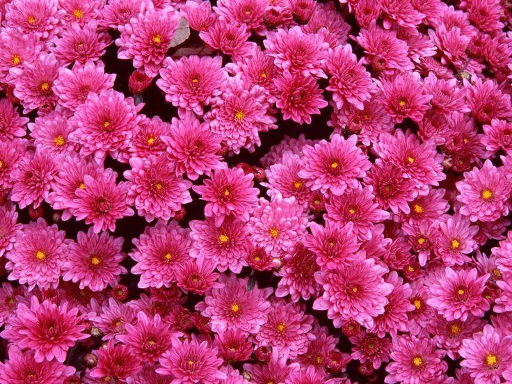 Best Flower Garden Images On Pinterest Beautiful Gardens - Colorful flower garden background
