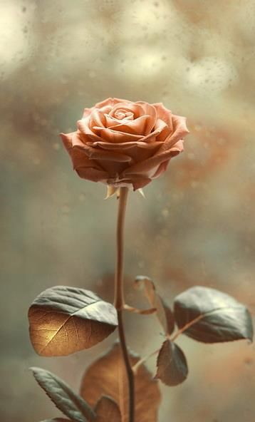 lovely peach color-rose.                                                                                                                                                      Mais