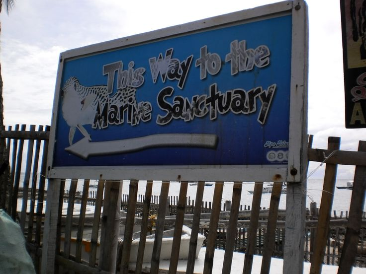Going to the Marine Sanctuary, Apo Island