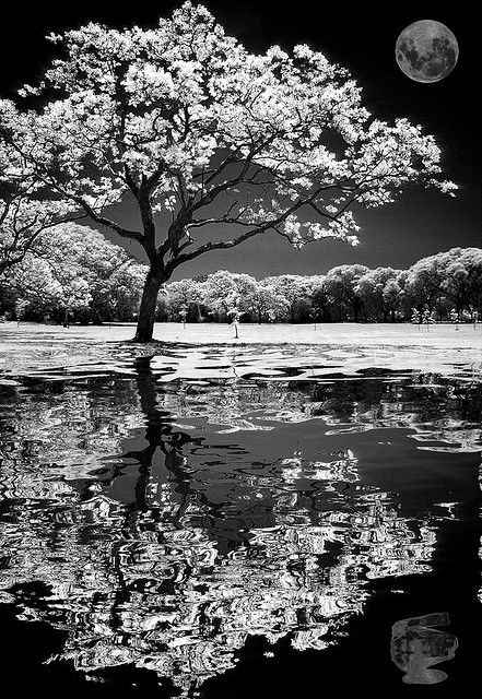 Absolutely beautiful black and white photo of tree and moon reflection.