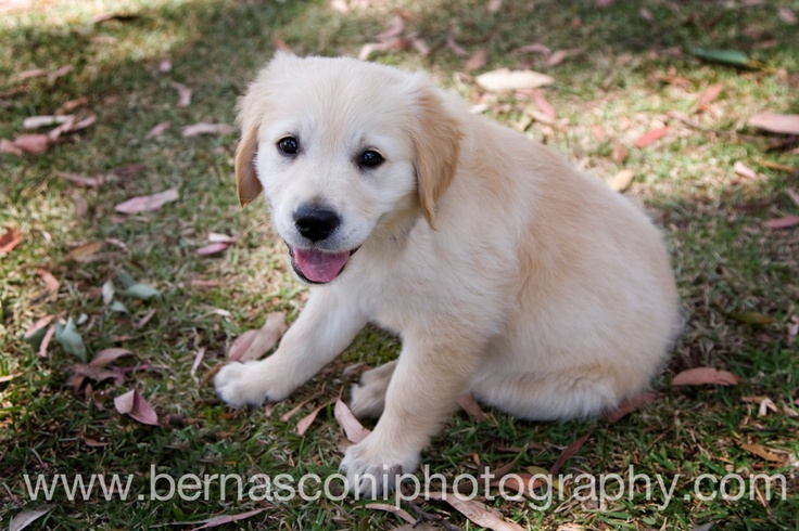 Brielle - the cutest puppy ever. www.bernasconiphotography.com