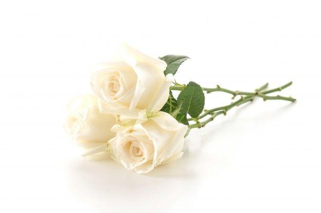 Rosa Blanca Png