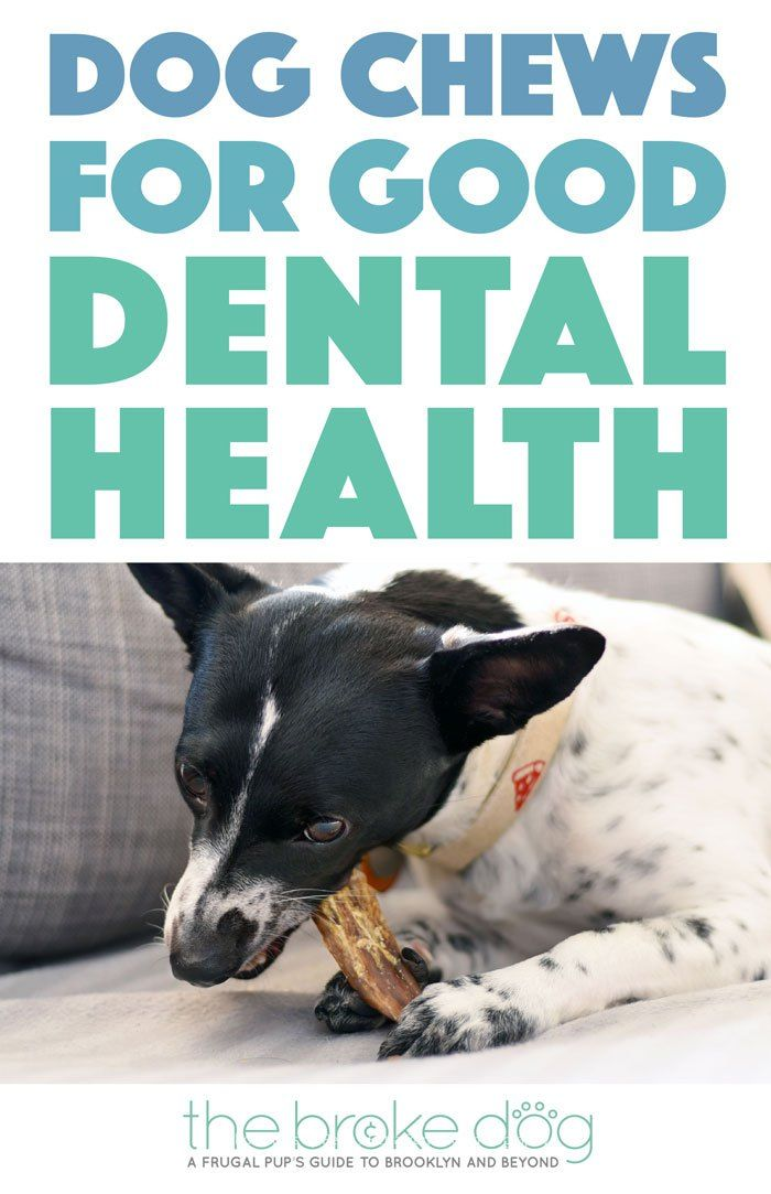Dog Chews For Good Dental Health From Only Natural Pet Dog Chews