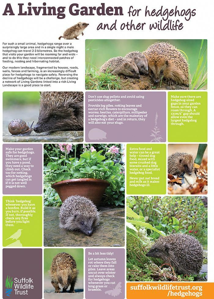 Tips For Helping Wild Hedgehogs In Your Garden Make Your Garden