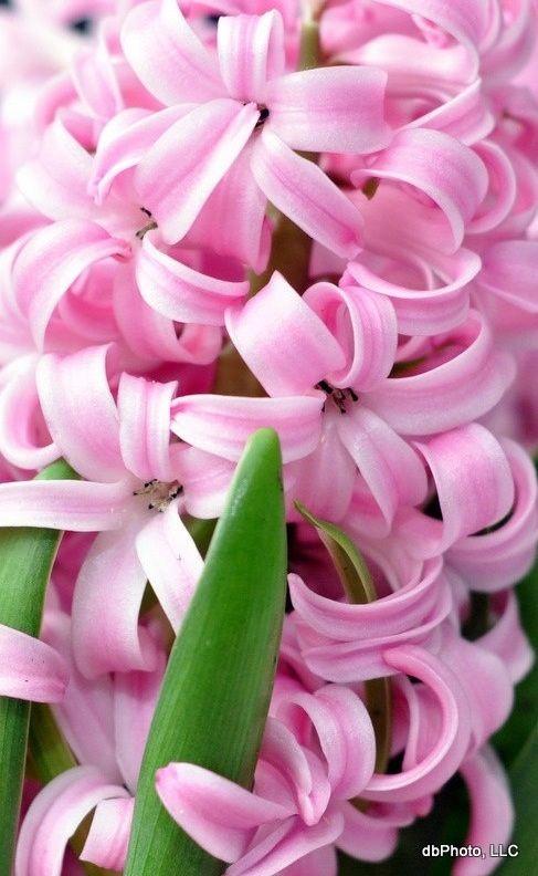 En sød lille lyserød blomst som passer til lille frøken himmel blå