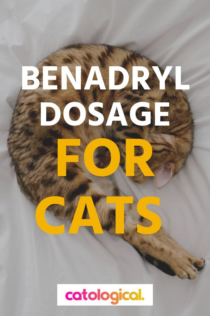 Should You Give Your Kitty Benadryl If So How Much Read On To Learn How Much Benadryl You Can Give To Your Cat Benadryl For Cats Cat Allergies Meds For Dogs