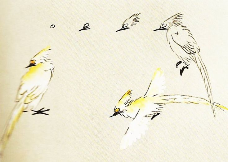 La perruche calopsitte en peinture chinoise xieyi