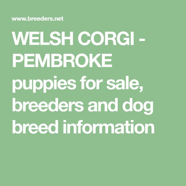 WELSH CORGI - PEMBROKE puppies for sale, breeders and dog breed information