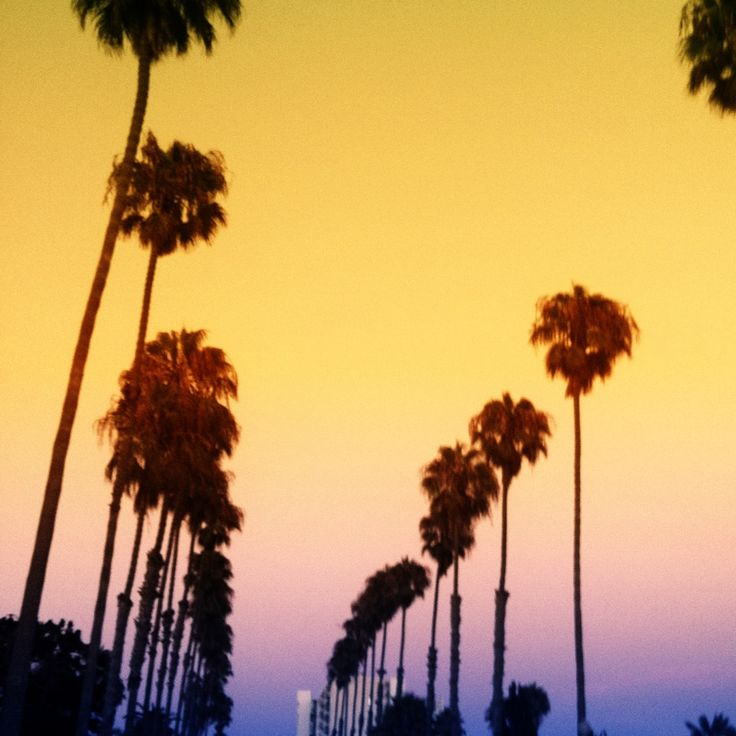 #SoCal #Palm_Trees