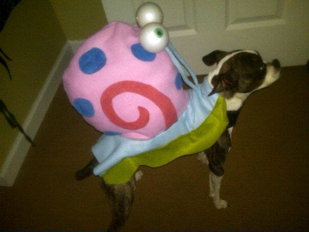 My son wanted to be Patrick from Spongebob for Halloween so I made my dog a Gary costume.