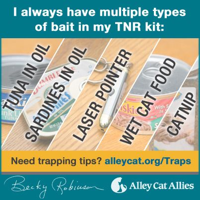 Bait for TNR (trap, neuter, and return) for feral cats: tuna in oil, sardines in…