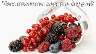 Тропинка к здоровью.: Чем полезны лесные ягоды?