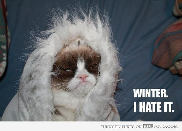 Grumpy cat and game of thrones!!! Sweet!