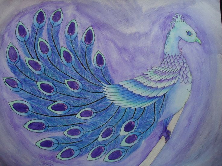 Peacock. water colour and ink