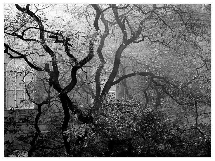 Сквозь ветви деревьев открывается вид на долину широкой реки, обои ...