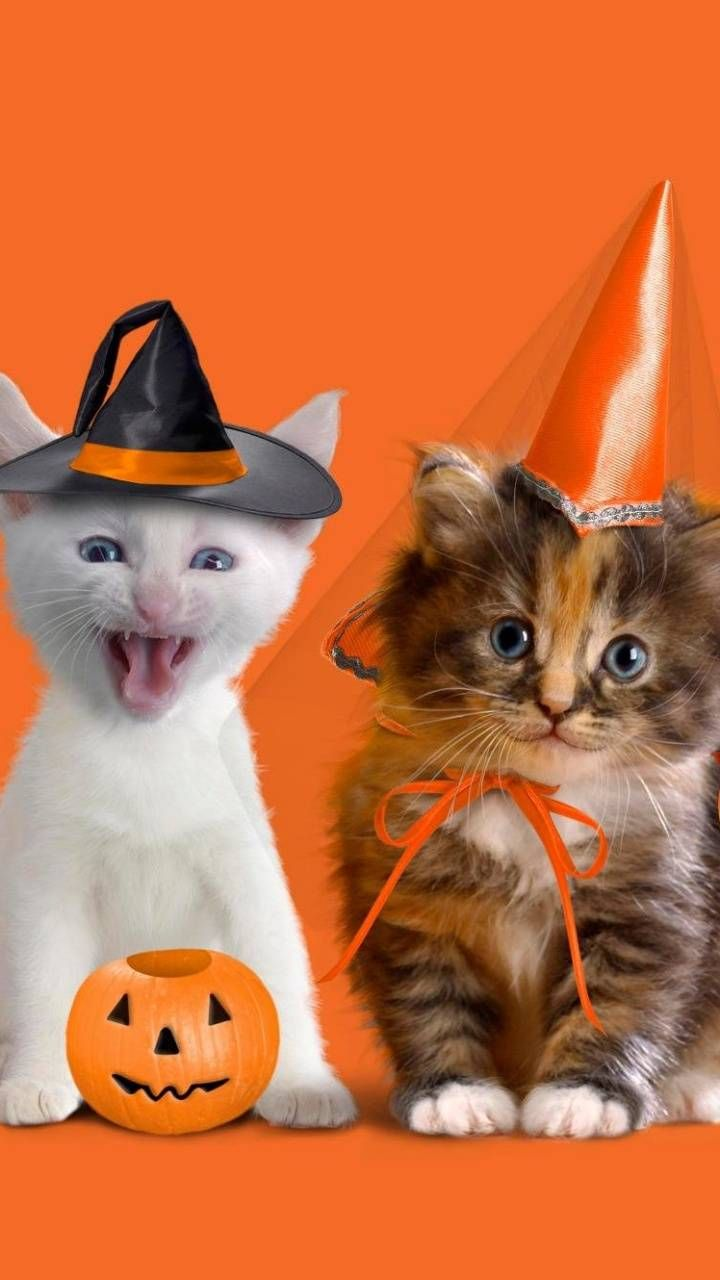 Download Halloween Kitty Wallpaper By Coacoapuffs88167822 6c Free On Zedge Now Browse Millions Of Popular Cats Wallpapers And Ringtones On Zedge And Bilder