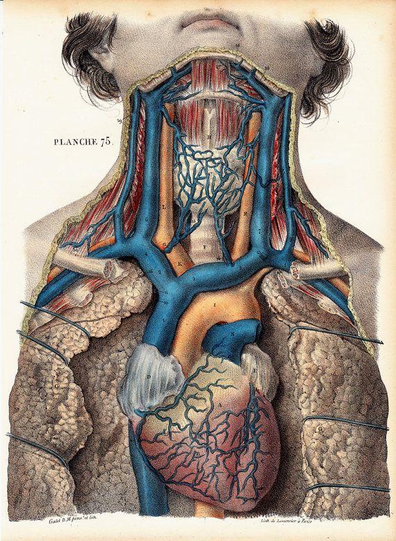 1844 Amazing Antique Anatomy Print By Twocatsantiqueprints 7500