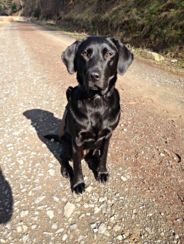Top Dogs Walking & Sitting Services in Cardrona, Peebles