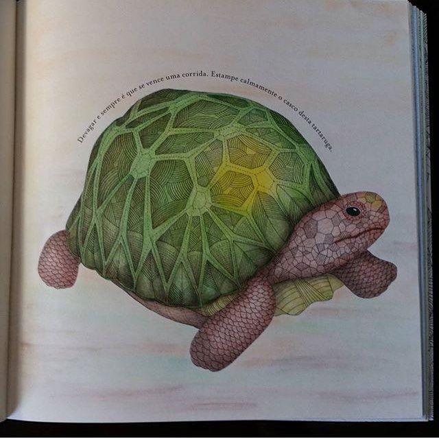 Animal Kingdom Colouring Book Tortoise Best Images About Johanna Basford On Secret