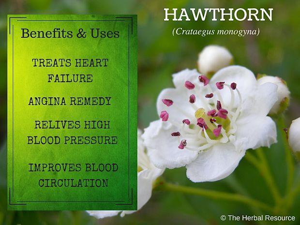 Pin On Medicinal Herbs