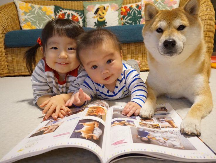 .  SHIBA-CHANっていう雑誌に載ってるよ .  僕達の写真はもちろん、ママが僕達を撮るコツとか語っちゃってるの .  見てね . 昨日11月25日発売の柴犬ムック本「SHIBA-CHAN」の 「シバ&キッズ」の企画に2ページ載せてもらってますー 有名柴ちゃんもたくさん載ってて、 とにかく柴犬だらけでたまらないですよ . #子守犬銀兄ちゃん #SHIBA_CHAN