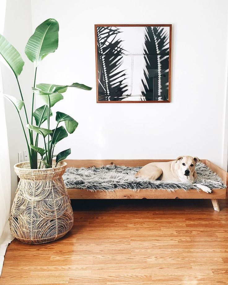 Green Body + Green Home on Instagram: indoor plants black white photography mid century dog bed #DogBeds