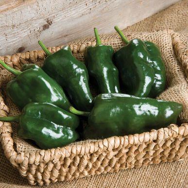 Tiburon Pepper Seeds (Capsicum annuum) + FREE Bonus 6 Variety Seed Pack - a $30 Value!