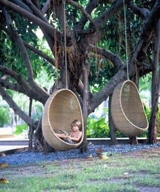 backyard swings and a really cool tree, the skateboard swing, i would stay here for hours, climbing, swinging