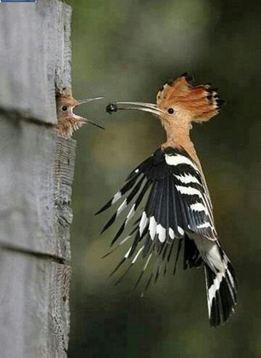 142 Best Birds Images On Pinterest