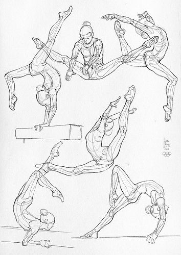Some anatomical studies - gymnastics