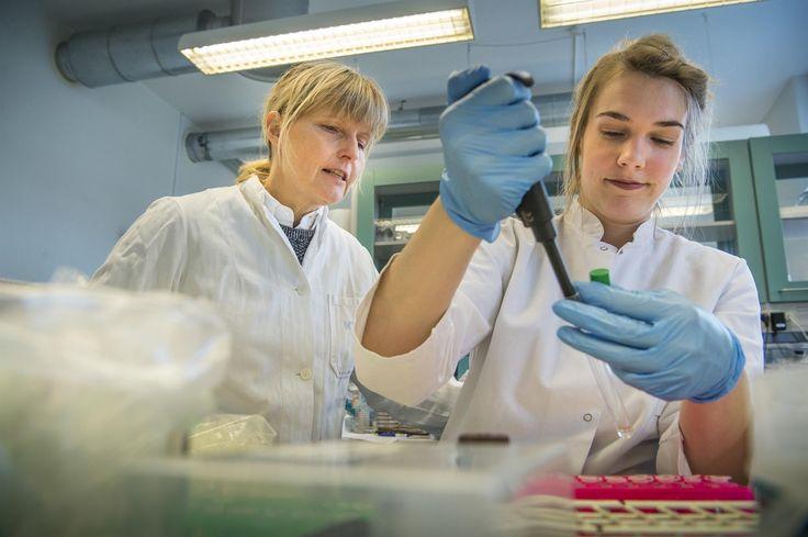 Afføringstransplantationer og virus er nogle af de våben, forskerne i fremtiden håber at kunne bruge mod de multiresistente bakterier.