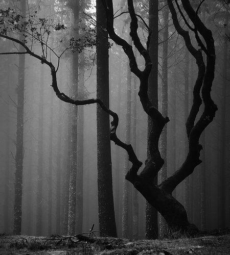 *Photos, Wood, Art, Dark Forests, Black White, Trees, Ribeiro Frio, Nature Beautiful, Photography