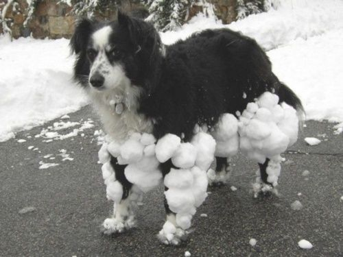 snow pants!: Dogs Pics, Border Collies, Funny Pictures, Pet, Snow, Diet Plans, Funnies, Funny Dogs Pictures, Animal