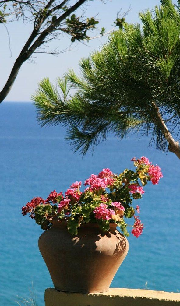 Cierra tus ojos...Imagínete paseando por aquí: playa,sol,palmeras,plantas vivaces,plantas suculentas....y tú deslumbrante al estilo #MaryKay...Estilo Mediterráneo www.marykay.es/meritxellcrespo