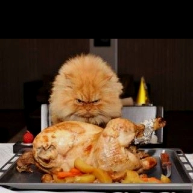 Wenn Du Denkst, Grumpy Cat Ist Böse, Dann Wirf Einen Blick Auf Den  Schaurigsten Kater Der Welt: Garfi. Er Ist Garfield Unglaublich ähnlich.  Atemberaubend!