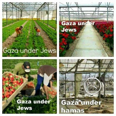 """פטריק פולוק on Twitter: """"#Gaza the truth.… """""""