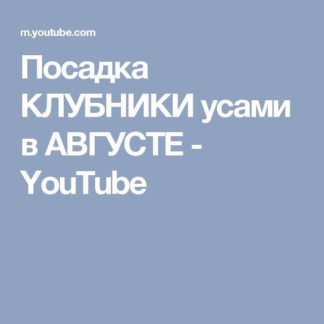 Посадка КЛУБНИКИ усами в АВГУСТЕ - YouTube