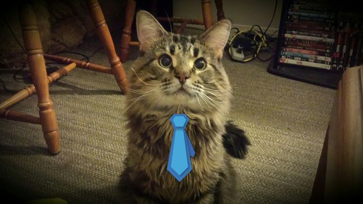 ❤❤ #albusseverus #cats