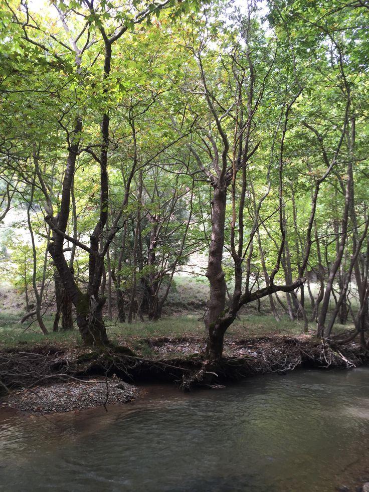 20 landscape river.  Kalavrita, Greece (Zachlorou area)