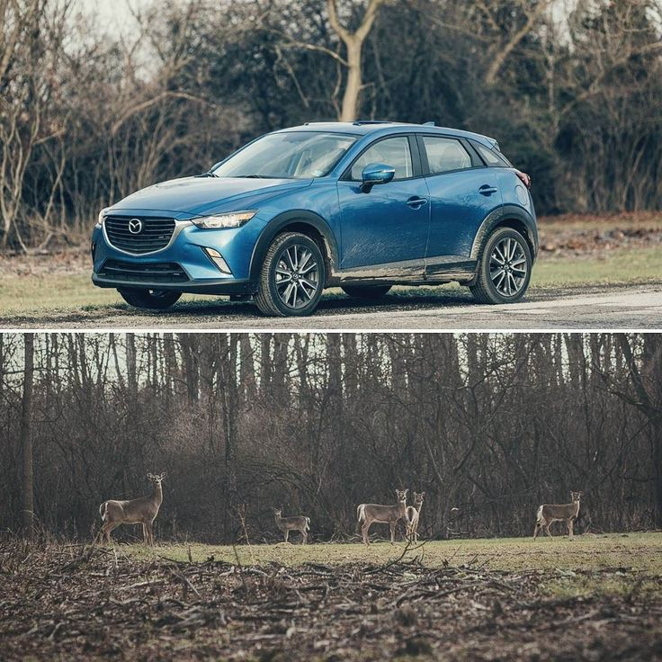 Winter adventures with the CX3 #mazda #cx3 #mazdamovement #crossover #nature #driver #deer #zoomzoom #drive #michigan #country  #whitetail #location #scouting