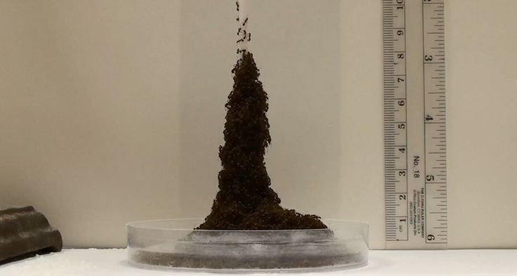 cool Hearth ants construct towers with three easy guidelines