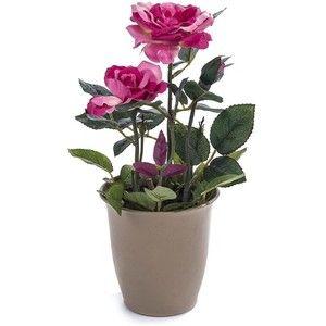 kwiaty w doniczce - Szukaj w Google