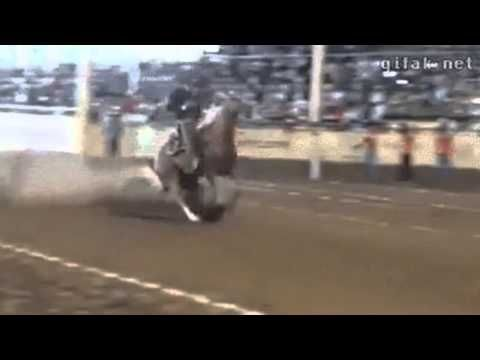 Incredible, This Horse is able to stop exactly! Lealiveus