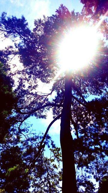 japan#daylight
