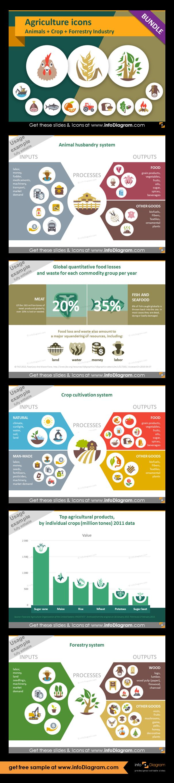 Food and Agriculture icons: Animals, Crop Cultivation, Forestry. All symbols in simple flat style, suitable for Metro UI style graphics. Icons provided in 5 versions. Slide presenting animal husbandry system. Graphic presenting crop cultivation process with icons of inputs and outputs. Graphic presenting forestry process with icons of inputs and outputs. Global quantitative food losses and waste per year slide. Top agricultural products chart and statistics of global quantitative food…